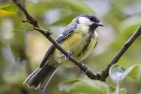 zpěv ptáků